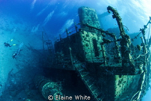 Wreck of the Gianas D by Elaine White