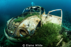 For sale....VolksWagon Beetle, One careful owner....FSH.... by Elaine White