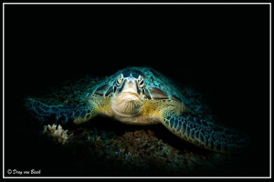Green turtle... by Dray Van Beeck