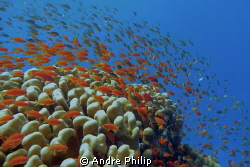 this is the red sea ... by Andre Philip
