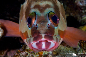 Grouper's look! by Pietro Cremone