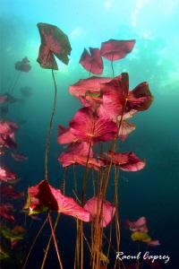 Freshwater colours by Raoul Caprez