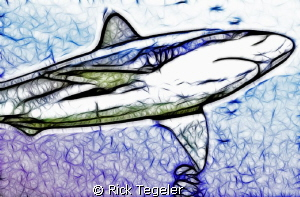 Oceanic White Tip by Rick Tegeler
