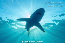 Shark in the Sun, Gardens of the Queen Cuba by Alejandro Topete
