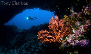 Arches. Father's Reef, Papua New Guinea by Tony Cherbas
