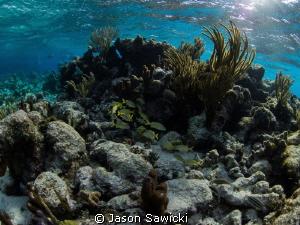 The Aquarium reef - North Sound by Jason Sawicki