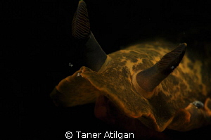 same nudi another shot by Taner Atilgan
