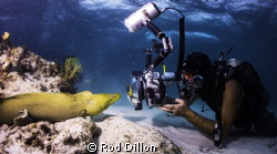 A green moray eel admires his own image in the photograph... by Rod Dillon