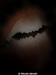 Batman dentures      Olympus E lense 105 mm macro F/14 ,1... by Mikulás Németh