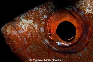 Eyes contac 1. by Cipriano (ripli) Gonzalez