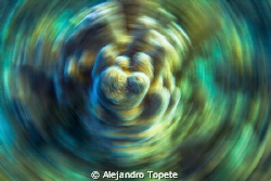 Pinacle in Movement, Gardens of the Queen  Cuba by Alejandro Topete