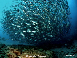 Canary Island fish ball by Alexia Dunand