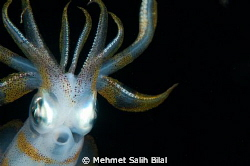 An Alien in night dive! by Mehmet Salih Bilal
