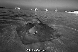 Cruising the shallows by Luke Gordon