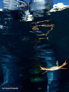 """""""Play of light and reflections"""" Swimming crab with its r... by Iyad Suleyman"""