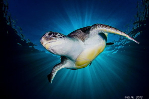 Playing With a turtle. by Fernando García