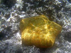 Great light and texture. Pin cushion starfish- Mounu Isla... by Don Bruschera
