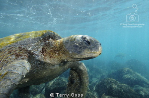 And over here, we have... more water and sand... Chelonia... by Terry Goss