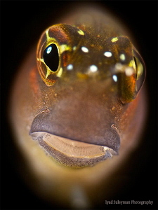 Watching Blenny 