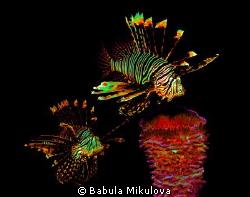 Firework for Happy New Year 2013 by Babula Mikulova