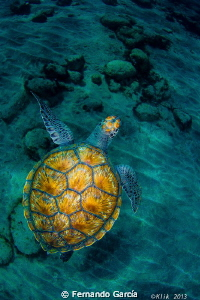 Turtle by Fernando García