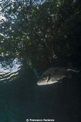 Freshwater. Hot Park lake. by Francesco Pacienza