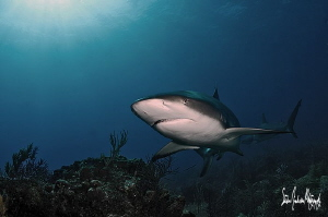 This image was taken during an afternoon of diving with l... by Steven Anderson