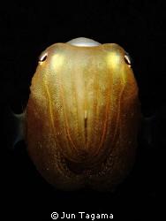 Juvenile Cuttlefish, G12 + Inon UCL165 by Jun Tagama