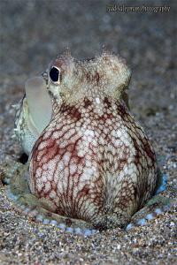 Coconut Octopus by Iyad Suleyman