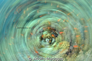 Anthias explosion Playing with spinning effect Nikon d7... by Adolfo Maciocco