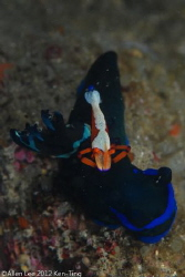 Nudi & Emperor Shrimp.Nikon D80,105mmVR. by Allen Lee