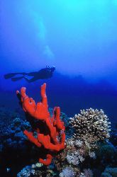 Red Sea - Deep South Egypt - Nikonov V - 20mm lens by Eduardo Lima