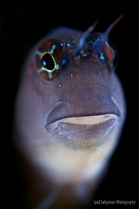 My old friend Blenny from my first dive in 2013! by Iyad Suleyman