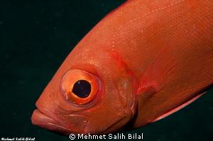 A Big Eye in night dive. by Mehmet Salih Bilal