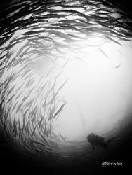 The vortex of Sipadan by Jimmy Low
