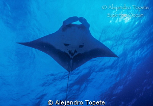 Manta Ray and the sun, Revillagigedo Mexico by Alejandro Topete