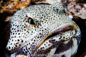 Jaw Fish in cave, La Paz Mexico by Alejandro Topete