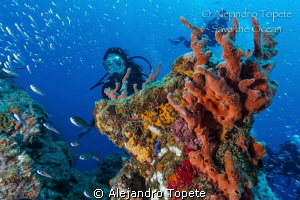 Reef with Diver by Alejandro Topete