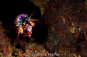 """""""MANTIS FEEDING"""" by Isabella Maffei"""