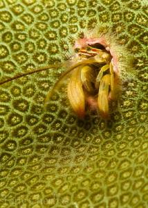 Coral Hermit by Tony Cherbas