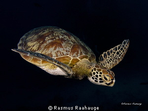Picture taken at Ribbons reefs, think it was Steve´s bommie by Rasmus Raahauge