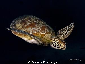 Picture taken at Ribbons reefs, think it was Steve´s bommie by Rasmus Raahauge