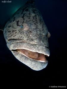 Grouper by Stéphane Primatesta