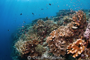 shallow reef beauty by Oscar Miralpeix