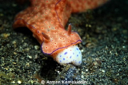 This is night dive photo taken in Lembeh, North Sulawesi.... by Azman Kamaluddin