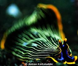 Unique species by Azman Kamaluddin