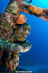 Giant Green Frogfish on the mast of the Stella Maru. The ... by Andrew Green