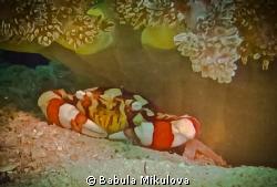 little crab by Babula Mikulova