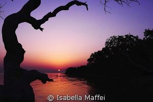 """SUNRISE ON MANGROVE"" by Isabella Maffei"
