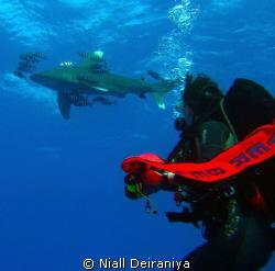Daedalus Reef - Oceanic White tip shark, circling above s... by Niall Deiraniya